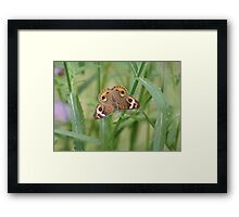 Buckeye Butterfly and Verbena 2 Framed Print