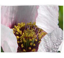 Heart of the Opium Poppy Poster