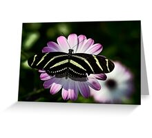 Zebra Longwings  Greeting Card