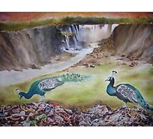 Peacock Trash Photographic Print
