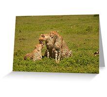 Cheetah Love Greeting Card