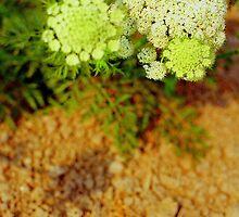 Spring2 by Ann Wang