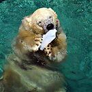 Playful Polar Bear by Tammy Howe
