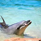 Cheeky Dolphin by Tammy Howe