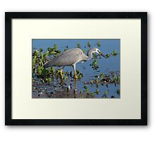 In The Bill Framed Print
