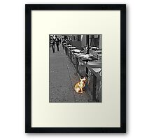 All alone in the big city... Framed Print