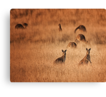 Skippy, skippy...... Canvas Print