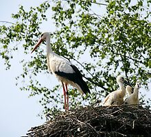 Stork family on the nest  by torishaa