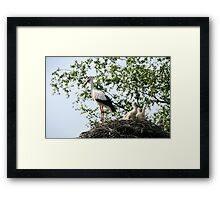 Stork family on the nest  Framed Print