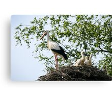 Stork family on the nest  Canvas Print
