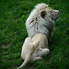 White lion 2 by fab2can