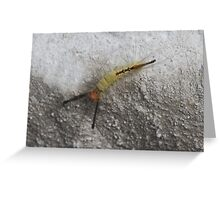 Crazy Little Caterpillar/Bug/Insect  Greeting Card