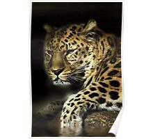 Lazing Leopard Poster