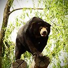 Sun bear by fab2can