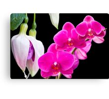 Fuchsias and Orchids  Canvas Print