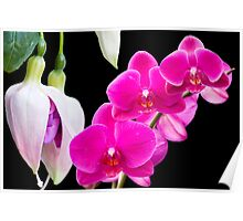 Fuchsias and Orchids  Poster