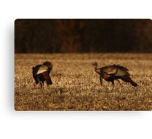 Turkeys in Golden Field Canvas Print