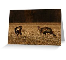 Turkeys in Golden Field Greeting Card