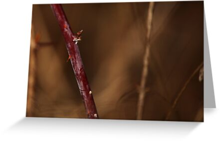 Abstract Thorns by Thomas Murphy