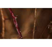 Abstract Thorns Photographic Print