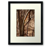 Saw Tree was 'Broke' this way Framed Print