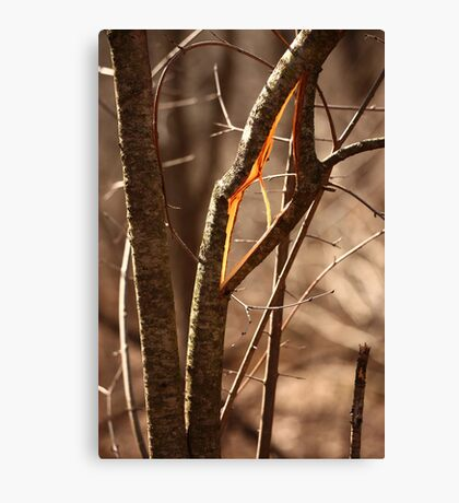 Saw Tree was 'Broke' this way Canvas Print