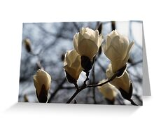 March Magnolia Greeting Card