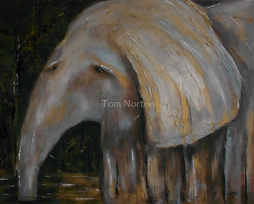 Baby Elephant 1 by Tom Norton