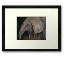 Baby Elephant 1 Framed Print