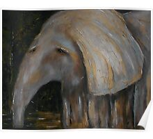 Baby Elephant 1 Poster