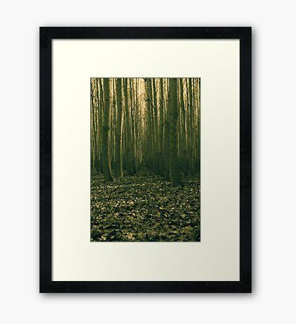 forest trial Framed Print