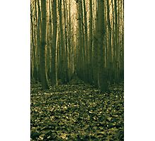 forest trial Photographic Print