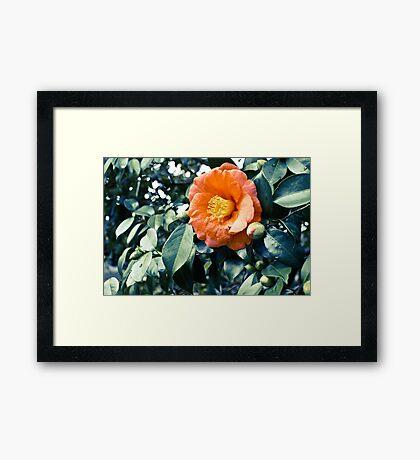 bloomtime Framed Print