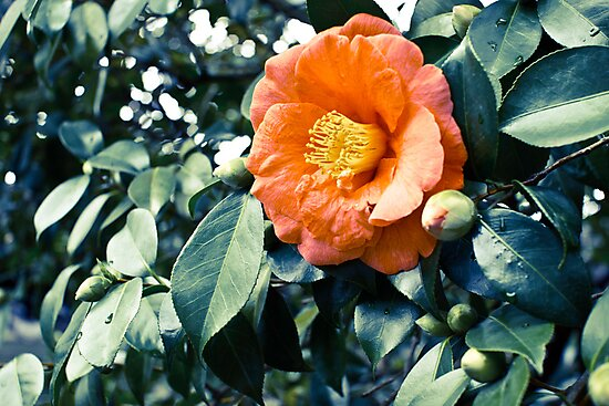 bloomtime by malek haneen
