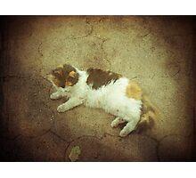 Calico Comfort Photographic Print
