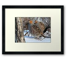Habitat / Gray Partridge Framed Print