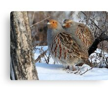 Habitat / Gray Partridge Canvas Print