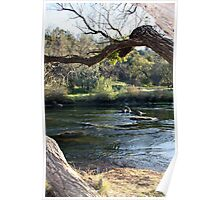 Trout Fishing Hole Poster