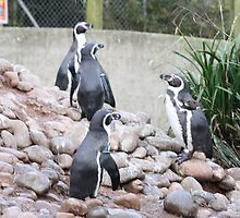 Penguin play time by Dahlia48