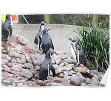 Penguin play time Poster