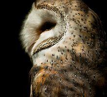 The Owl  by David  Preston