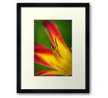Yellow and red day lilly Framed Print