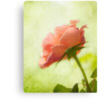 Vintage pink rose Canvas Print