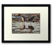 Monte Vista Sandhill Cranes 1 Framed Print