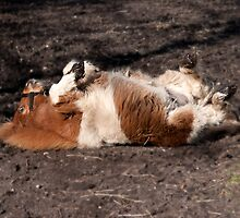 Pig in mud!!!!!!!!!!!!!!! by LorrieBee