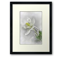 White Columbines Framed Print