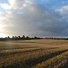Harvest Fields 1, Rustic Irish Fields 2007 by ArleneMartine