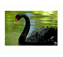 Lonely Black Swan Art Print