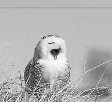 Be Yawned Snowy by DigitallyStill