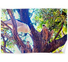 Night heron and babies Poster